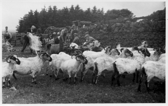 clipping-barnvannoch-1958-1