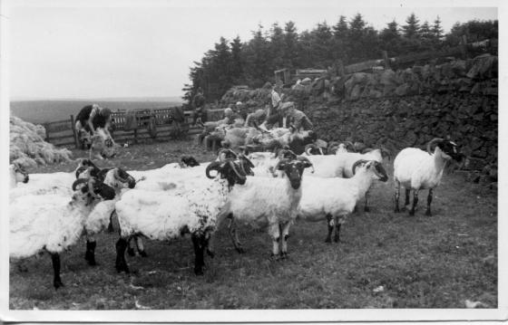 clipping-barnvannoch-1958-3
