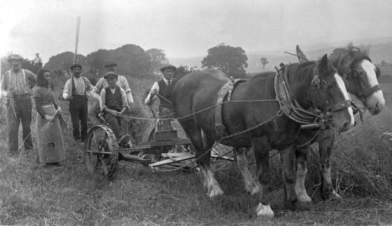 harvest-mains-of-larg-j-forster-driving