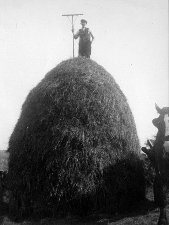 haystack-dalnigap
