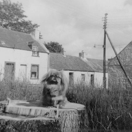 1960s-mcdonalds-dog